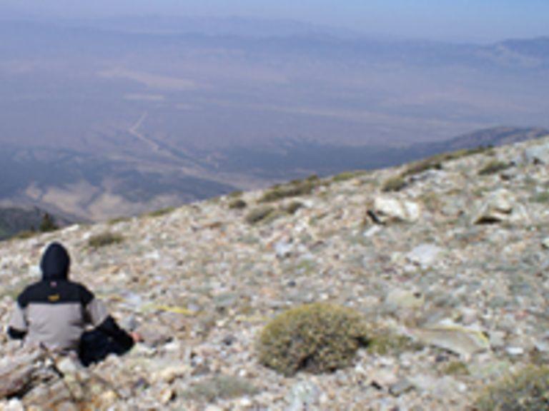 Der Beitrag von Ökotonen zur funktionalen, strukturellen und floristischen Vielfalt semiarider Hochgebirge - eine Fallstudie im Great Basin, USA