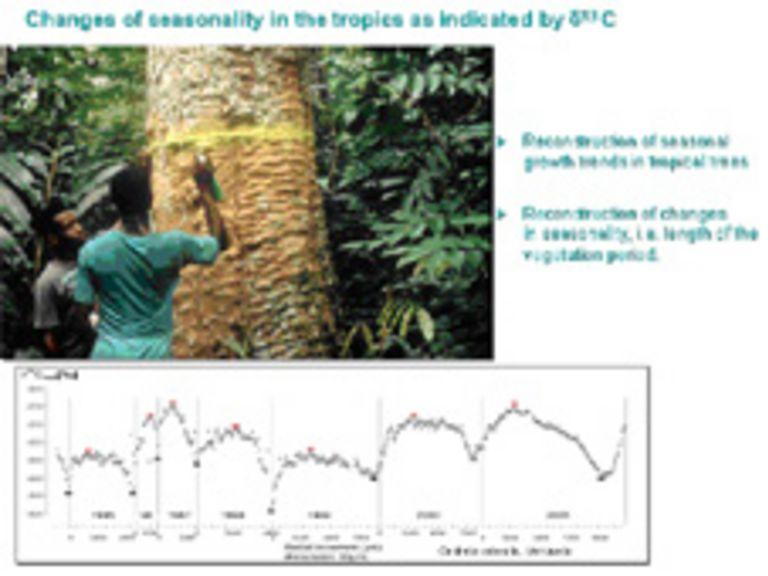 Veränderungen von Baumringisotopen in Wäldern Südostbrasiliens während des 20. Jahrhunderts: Wie beeinflussen die klimatischen Bedingungen Wachstum und Wassernutzungseffizienz